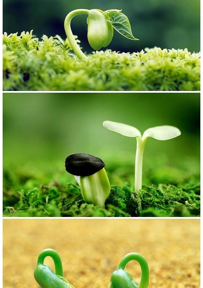 3d几何_种子发芽嫩芽幼苗PPT背景图片 - 小白办公
